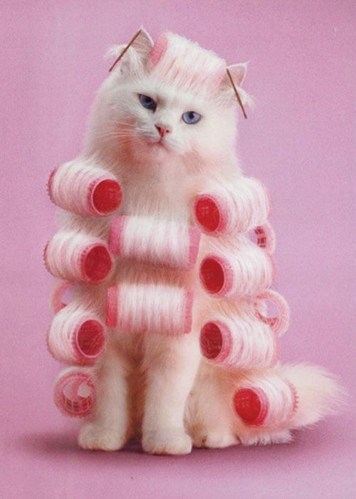 pink rollers
